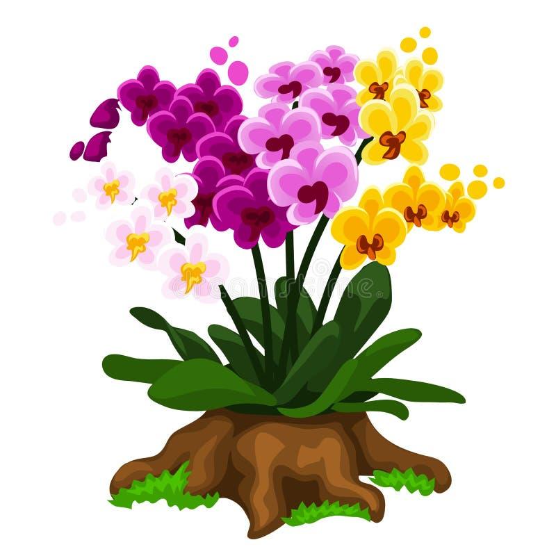 Stubarwny storczykowy kwiatu dorośnięcie na fiszorku ilustracji
