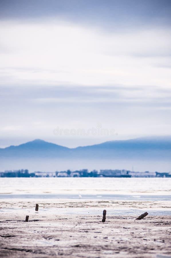 Stubbar på stranden på låg tide arkivbild