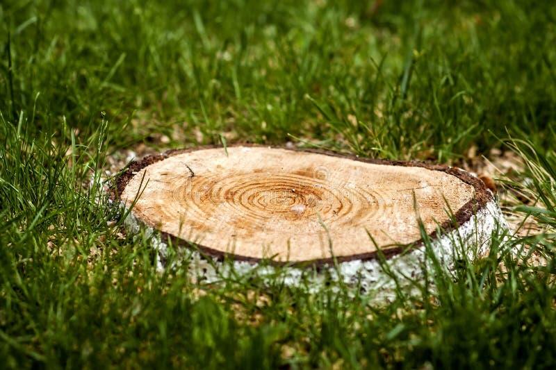 Stubbe av för snitt ett träd ner i grönt gräs Skogsavverkningproblem c arkivfoto