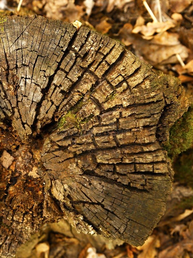Download Stubbe För Texturtimmerträd Arkivfoto - Bild av trä, deforestation: 78729984