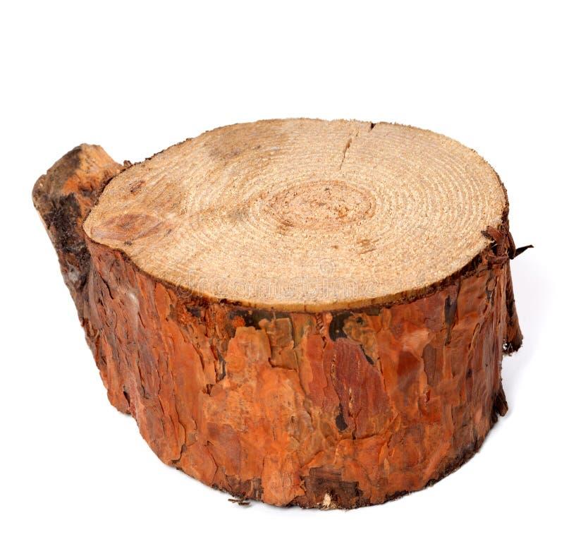 Stubben av sörjer trädet royaltyfri bild