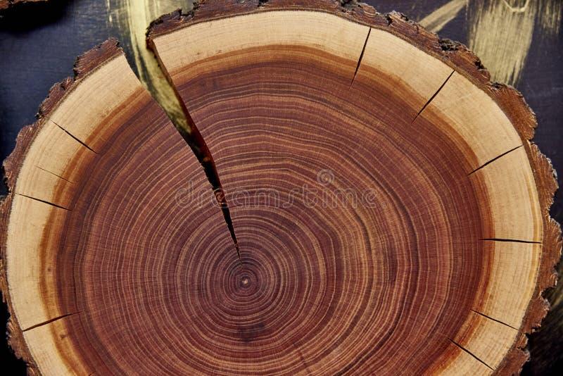 Stubbeträd med cirklar och sprickor arkivfoton