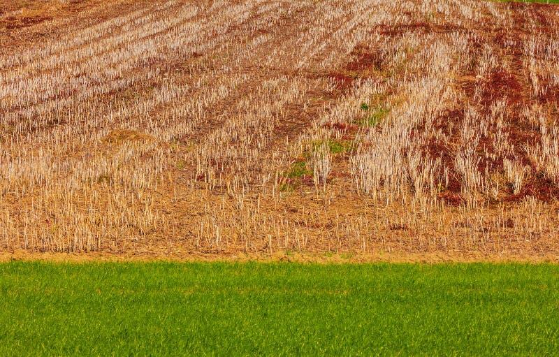 Stubble el campo de maíz en una cuesta de una colina en otoño fotografía de archivo