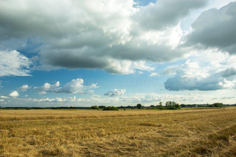 Stubble en el campo y las nubes en el cielo fotografía de archivo
