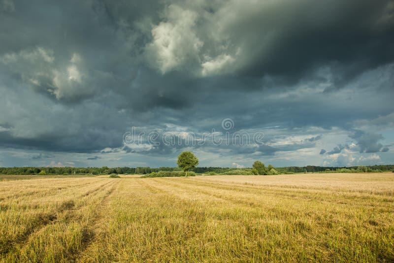Stubble en el campo y las nubes de tormenta oscuras en el cielo imagen de archivo libre de regalías
