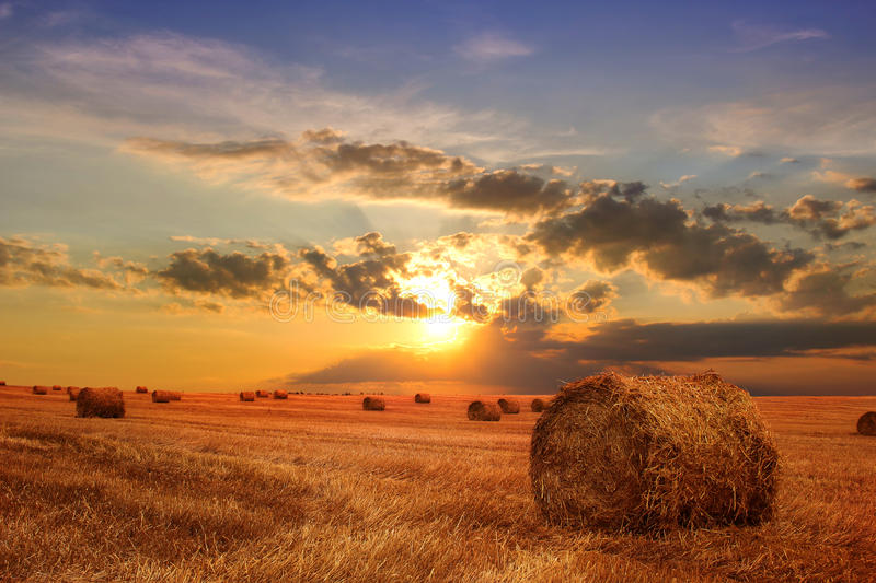 Stubble field and hay bales stock photos