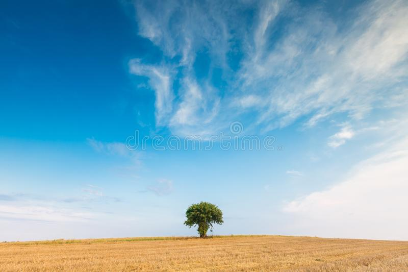 Stubble field with single tree stock photo