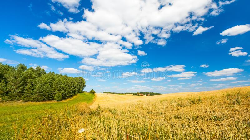 Stubble field under blue sky with white clouds stock photos