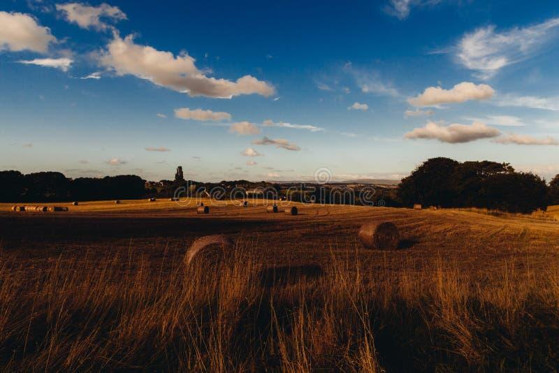 Stubble fields after harvest stock images