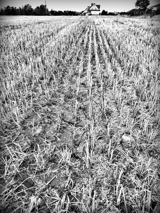 stubble Mirada artística en blanco y negro fotos de archivo