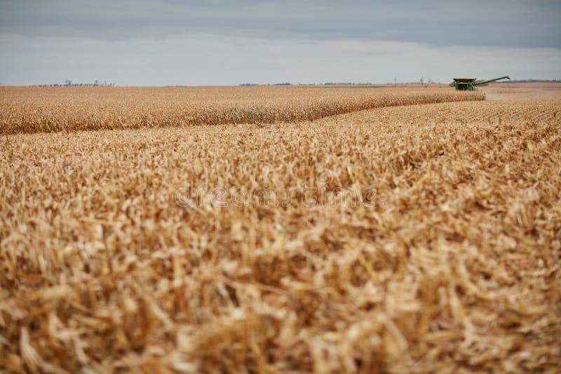 Stubble y bromee en un campo cosechado del maíz imágenes de archivo libres de regalías
