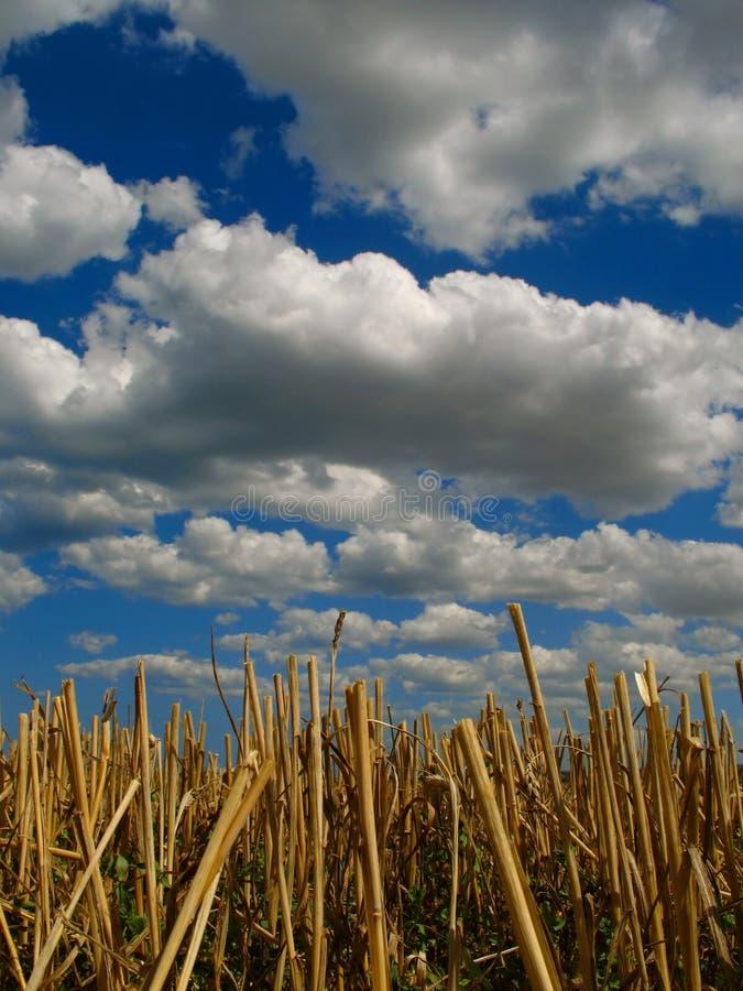 Stubble y nubes fotografía de archivo libre de regalías
