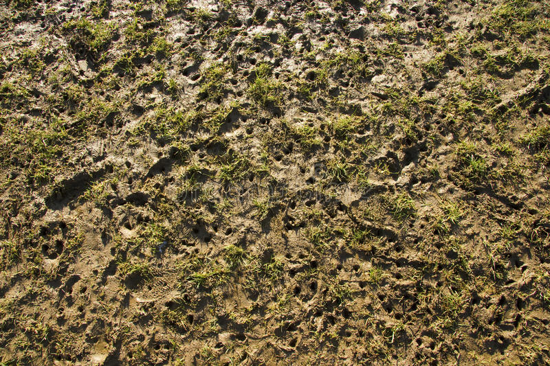 Download Stud marks on muddy pitch stock photo. Image of play - 18687040