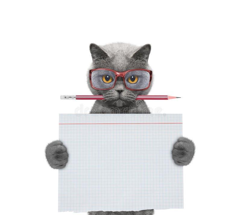 Studend del gato en la escuela que lleva a cabo el trozo de papel imagenes de archivo