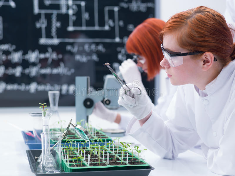 Student analyzing in a chemistry lab royalty free stock image