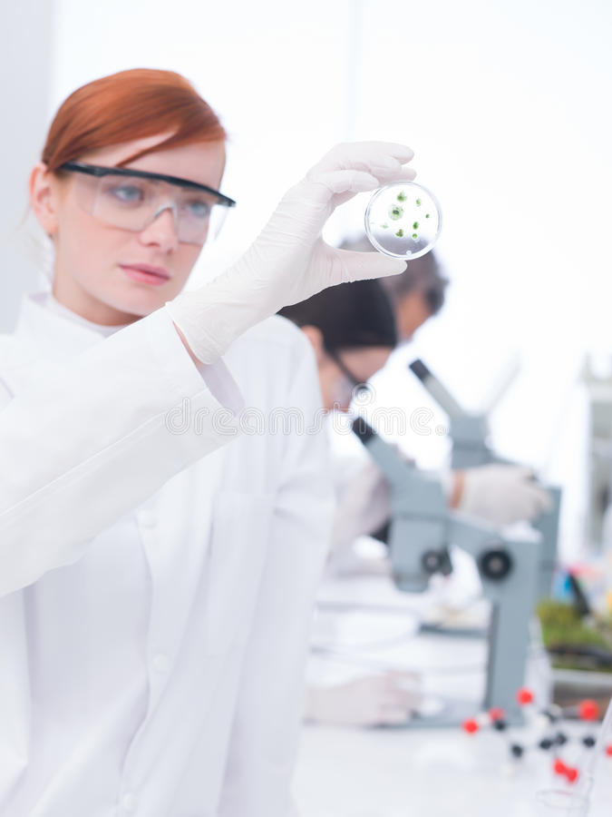 Download Student analyzing samples stock image. Image of care - 31258699