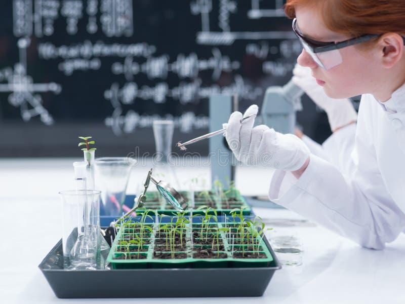 Student, der in einem Chemielabor analysiert lizenzfreies stockbild