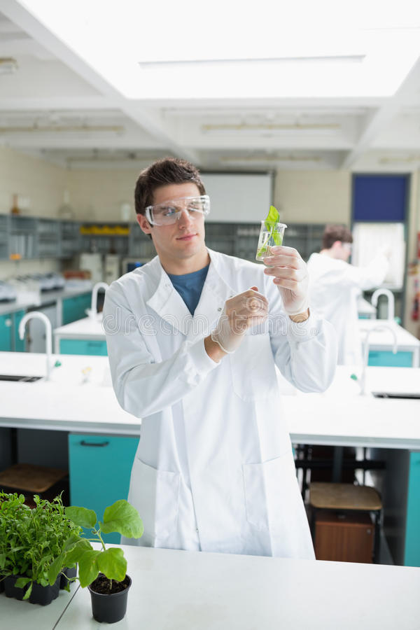 Student holding up beaker with seedling in it stock image