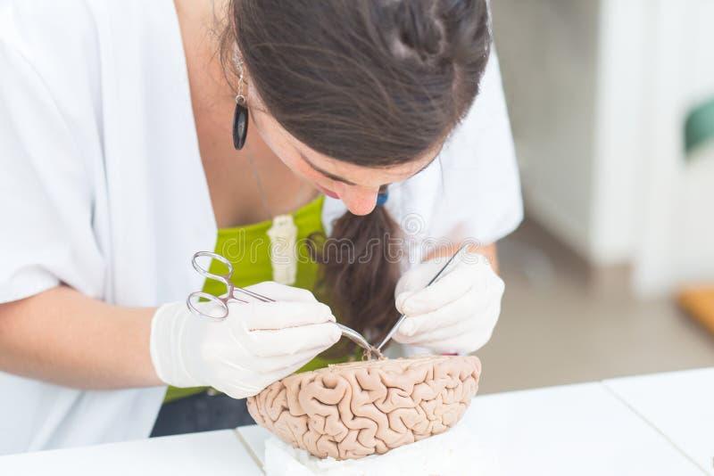Studente di medicina che divide un cervello umano fotografia stock libera da diritti