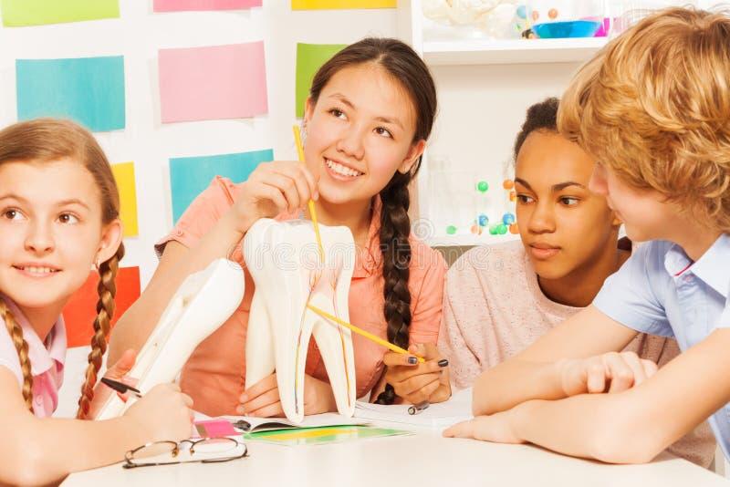Studenten die tandstructuur bestuderen bij de les royalty-vrije stock afbeelding