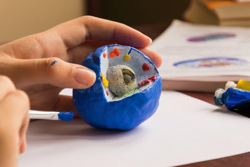 Studenten gör en leramodell av en cell Studenten som rymmer borstefärgen att delar av cellen royaltyfri foto