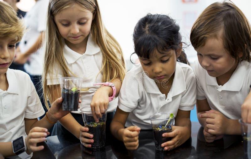 Studenten in klasse het leren experimenteel planten royalty-vrije stock foto