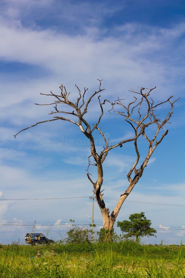 Studenten reiten bloßen Baum lizenzfreies stockfoto