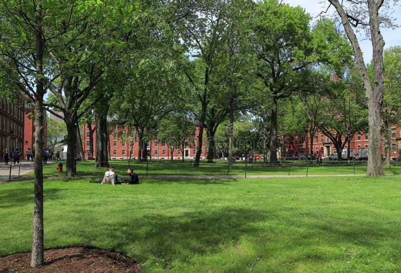 Studenter och turister som vilar på gräsmattan och går runt om den Harvard gården, historen royaltyfri fotografi