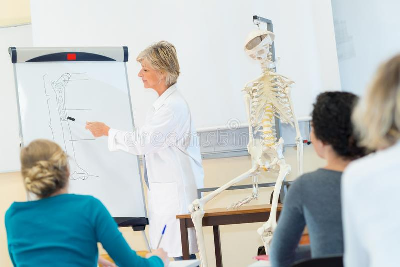 Studentmedicin som undersöker den anatomiska modellen i klassrum royaltyfri foto