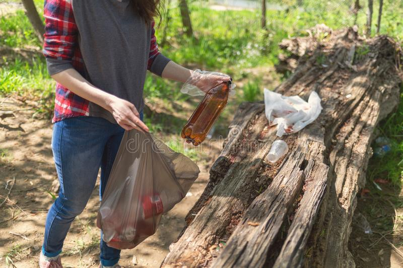 Students conduct a cleaning in the woods. A young woman collects bottles in a garbage bag. The concept of volunteering and royalty free stock image
