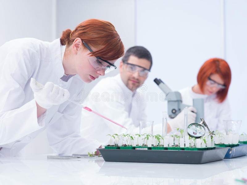Download Students Experimental Studies Stock Photo - Image of earth, laboratory: 31257792
