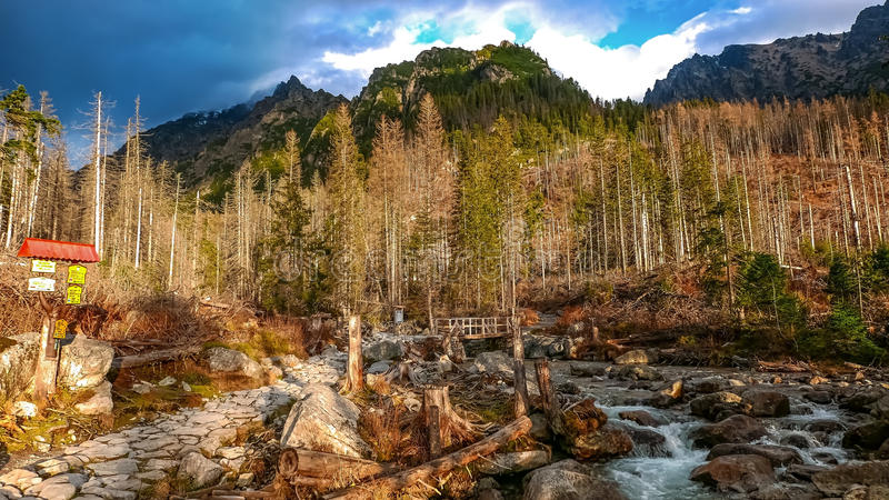 Studeny-potok Kalter Strom in hohen Tatras-Bergen, Slowakei stockfoto