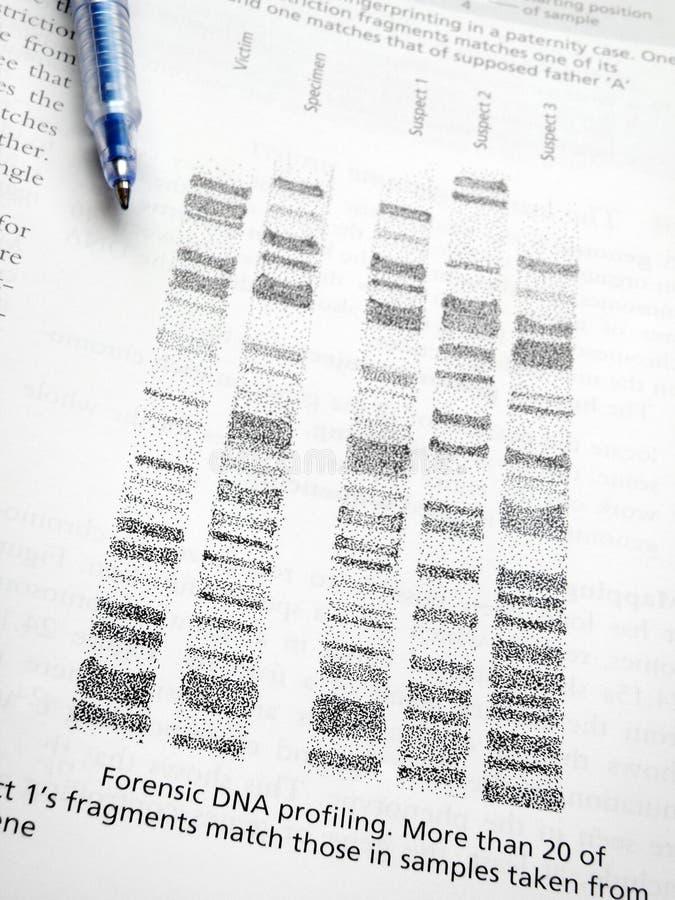 Studieren des DNA-Ein Profil erstellens stockbilder