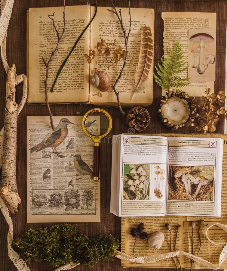 Studio botanico d'annata, libri ed illustrazione immagine stock libera da diritti