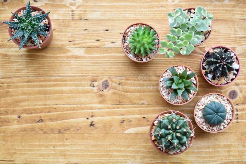 Studio del cactus di vista superiore immagini stock libere da diritti
