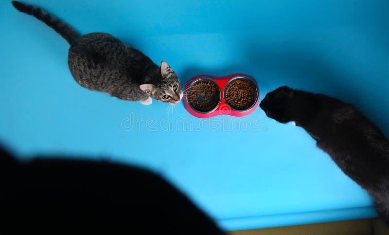 Studio die van een zitting van de twee katten grijze en witte en gestreepte kat op bruine achtergrond wordt geschoten royalty-vrije stock fotografie