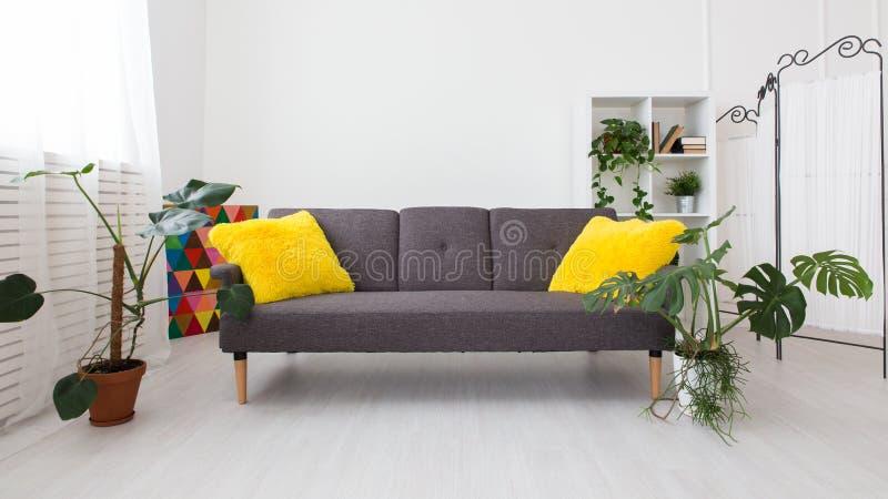 Studio moderne avec les plantes vivantes couleurs lumineuses dans l'intérieur sofa gris avec les oreillers jaunes photos libres de droits