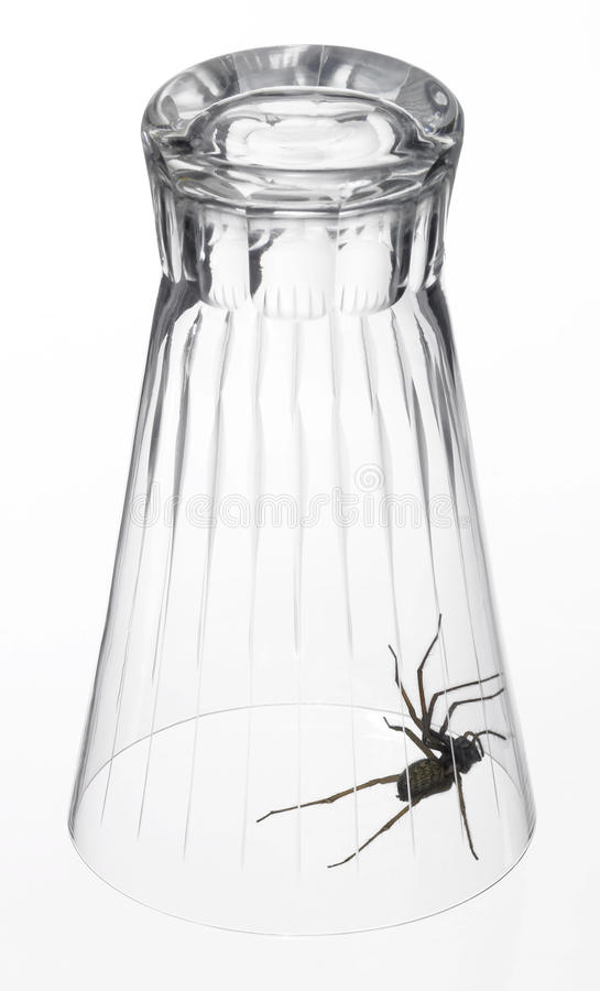 spider under a drinking glass royalty free stock images image 30007229