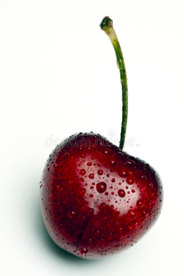 Studio photography of a wet cherry royalty free stock photography