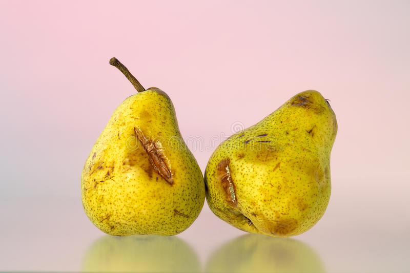 Studio shoot of two old pears royalty free stock images