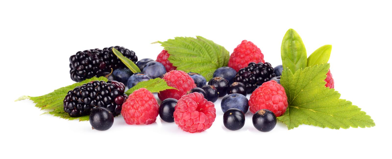 Studio shot assorted fresh various berries isolated white background stock image