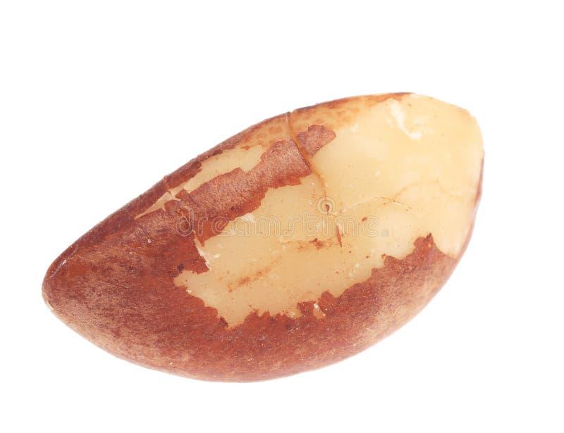 Studio shot of brazil nut. royalty free stock image