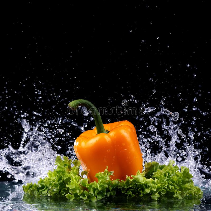 Studio shot with freeze motion of peppers. In water splash on black background stock images