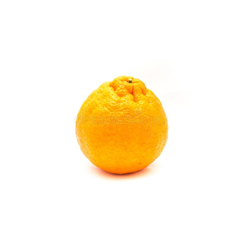 One sumo. Studio shot of one large ripe, easy to peel Sumo Orange isolated on white. A Cross Between Mandarin and California Navel Orange, developed in Japan and royalty free stock photos
