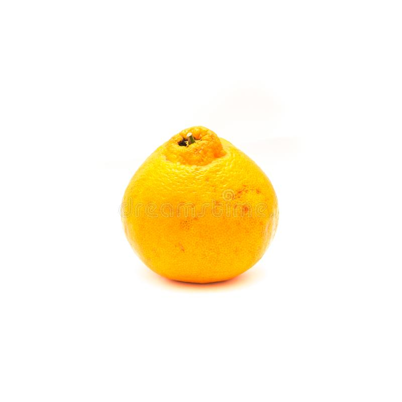 One sumo. Studio shot of one large ripe, easy to peel Sumo Orange isolated on white. A Cross Between Mandarin and California Navel Orange, developed in Japan and royalty free stock photography