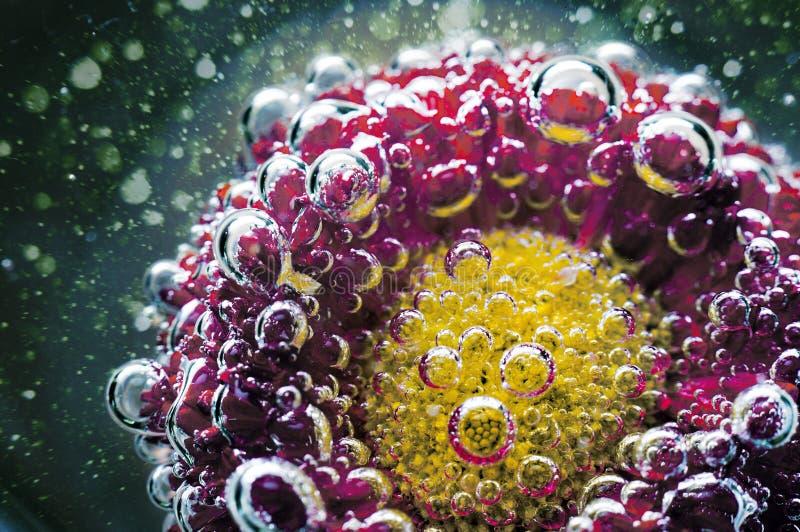 Studio strzał Czerwoni Barwioni kwiaty pod wodą fotografia stock
