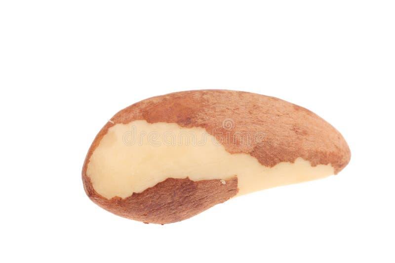 Studio tiré des noix du brésil. photos libres de droits