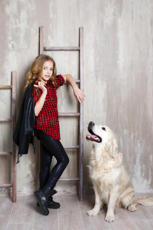 Studioporträt eines Mädchens mit einem Hund auf einem grauen Hintergrund lizenzfreie stockfotografie