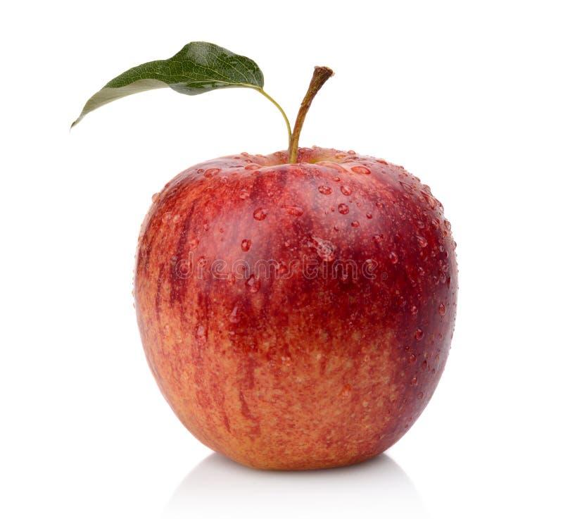 Studioskott av det hela våta röda äpplet royaltyfri foto