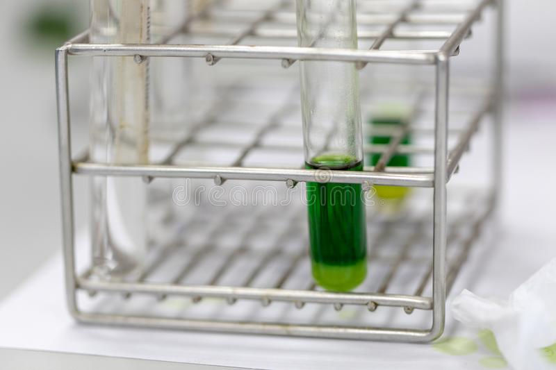Chromatography is used to separate components of a plant. Study of Chromatography is used to separate components of a plant royalty free stock photography